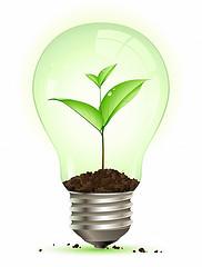 lightbulb with plant inside